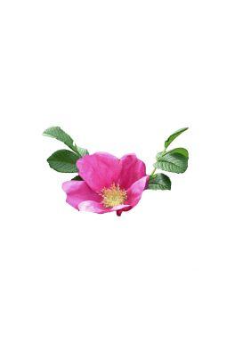 Роза морщинистая (Rugosa)