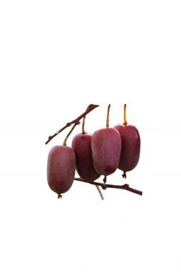 Актинидия остролистная Пурпурна Садова (Purpurna Sadowa)