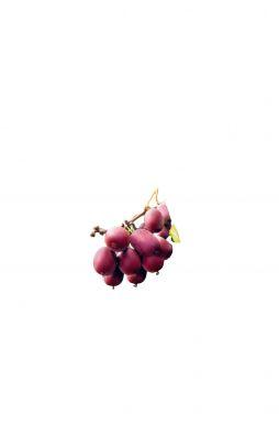 Актинидия остролистная Кенс Ред (Ken's Red)
