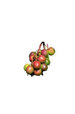 Актинидия остролистная Ананасная (Ananasnaya)