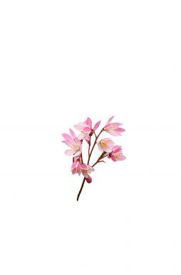 Дейция гибридная Юки Черри Блоссом (Yuki Cherry Blossom)