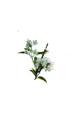 Дейция гибридная розовая Кампанулата (Campanulata)