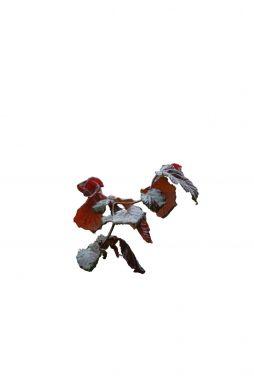 Лещина обыкновенная Ред Маджестик (Red Majestic)
