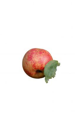 Яблоня Коричное (осенний сорт)