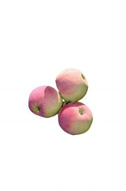 Яблоня Свежесть (осенний сорт)