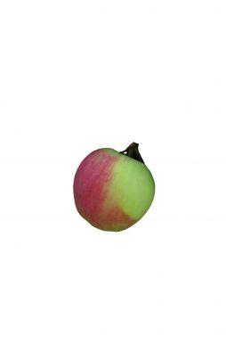 Яблоня Синап Северный (зимний сорт)