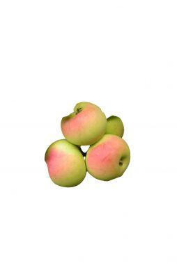 Яблоня Звёздочка (зимний сорт)