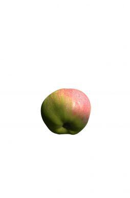 Яблоня Богатырь (зимний сорт)