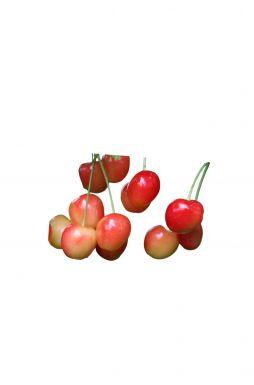 Черешня Розовый Жемчуг