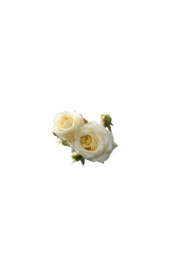 Роза плетистая Эльф (Elfe)