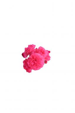 Роза плетистая Розариум Ютерзен (Rosarium Uetersen)