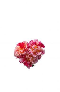 Роза кустовая Эдгар Дега