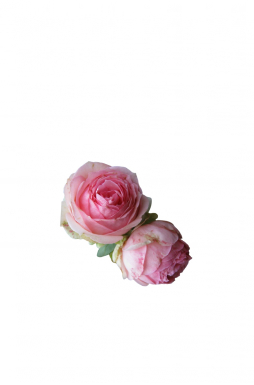 Роза кустовая Ферст Леди