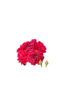 Роза миниатюрная Фейри Данц