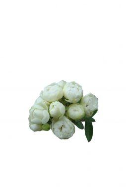Роза миниатюрная Уайт Марсдог