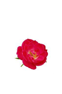 Роза миниатюрная Литтл Буккаро